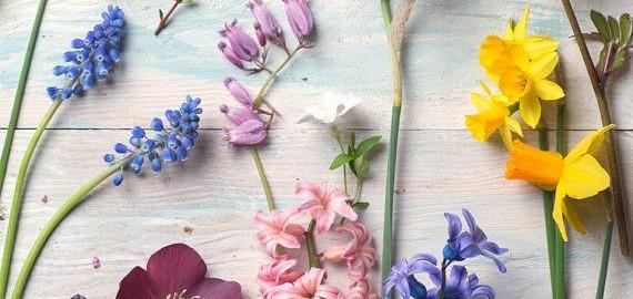 La bonne id e cadeau pour un jardinier il tait une fois - Cadeau pour jardinier ...